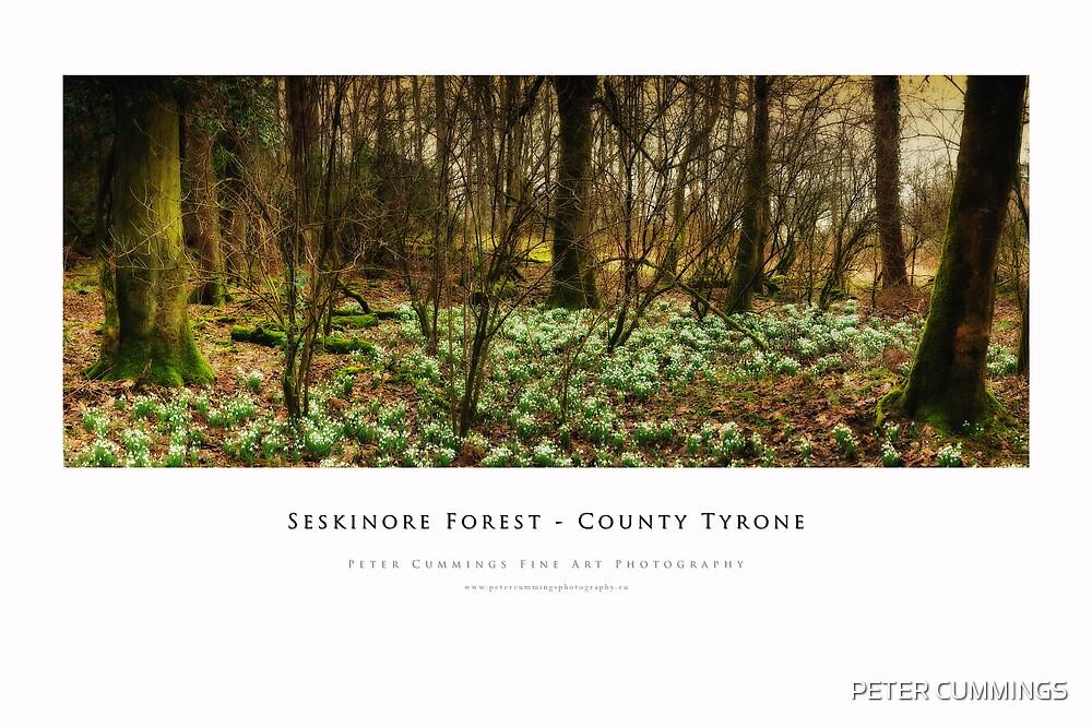 Seskinore Forest by PETER CUMMINGS