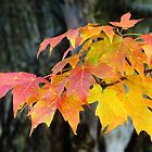 Autumn Leaves  by lorilee