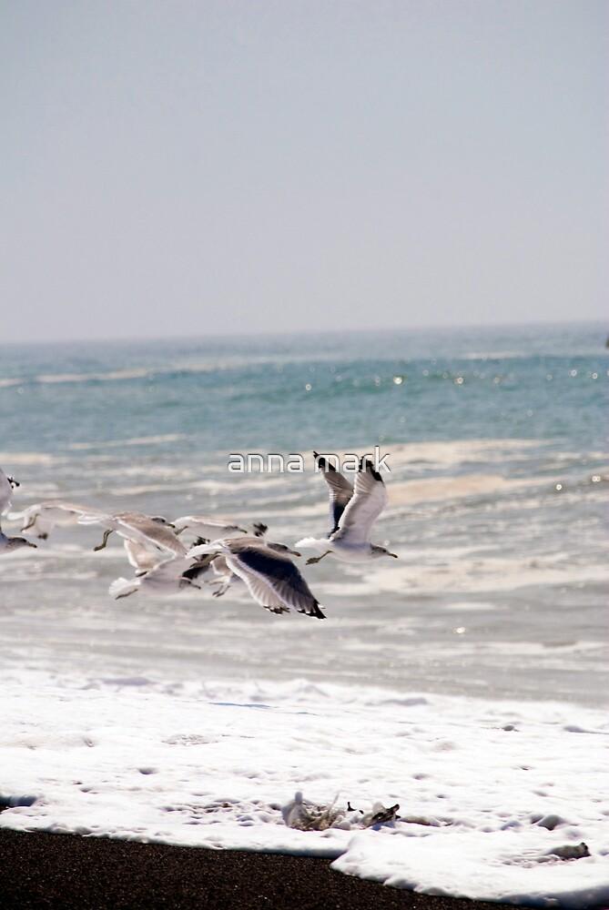 Beach Birds 1 by anna mark