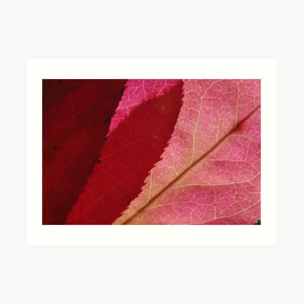 autumn spindle-tree Art Print