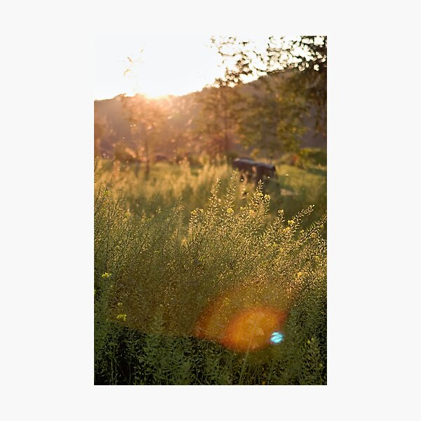 Sunset in autumn Photographic Print