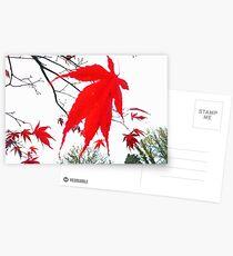 Acer Leaf. Grasmere. Postcards