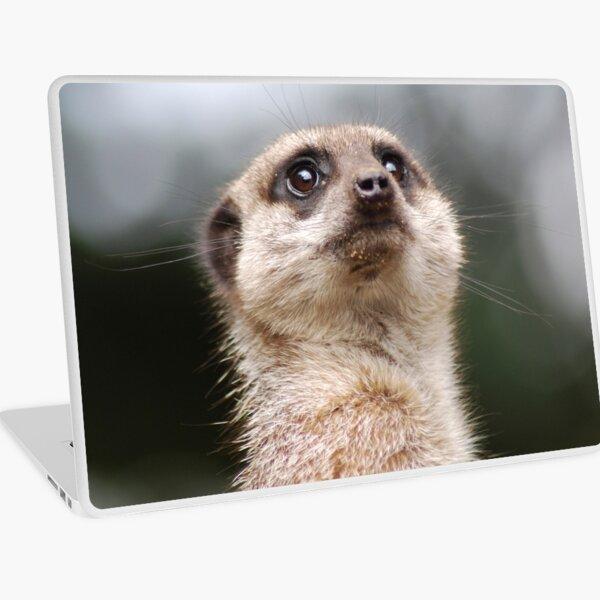 Meerkat Laptop Skin