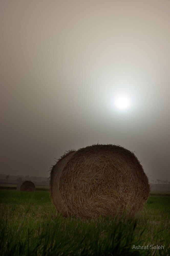 Hay in the dust by Ashraf Saleh