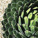 Succulent by Tama Blough