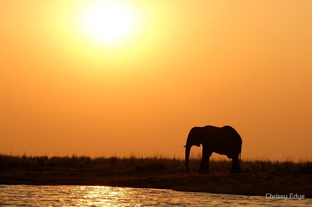 Elephant and Sunset by Chrissy Edye