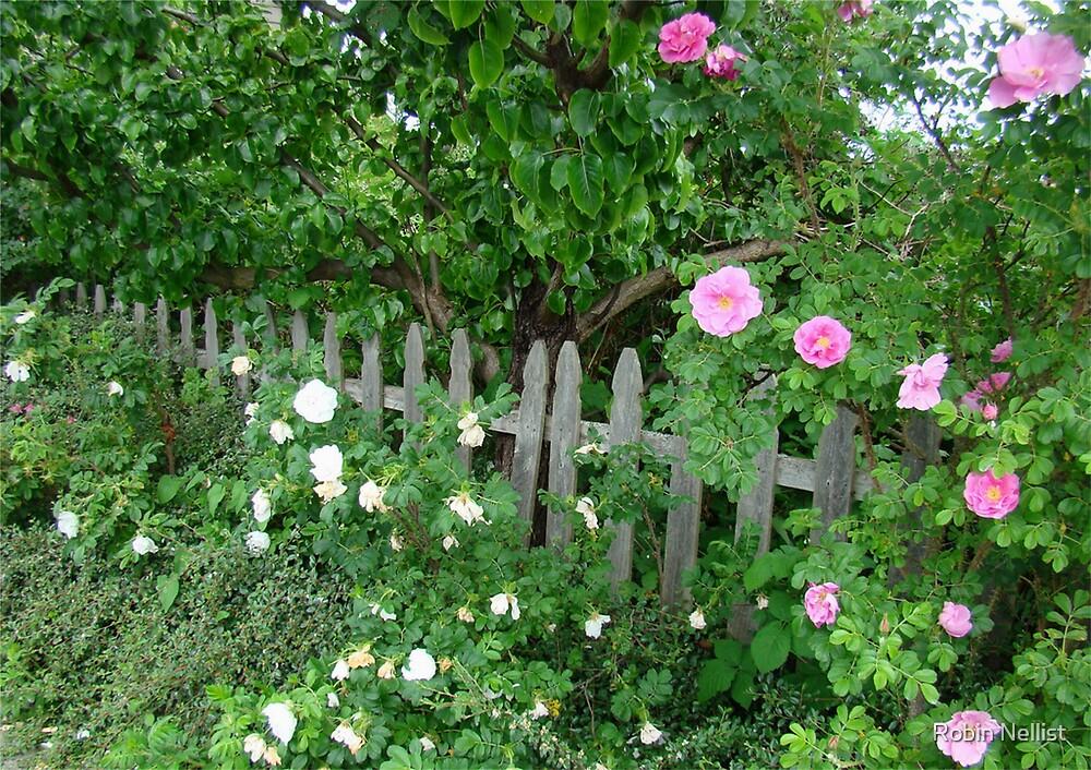English Garden by Robin Nellist