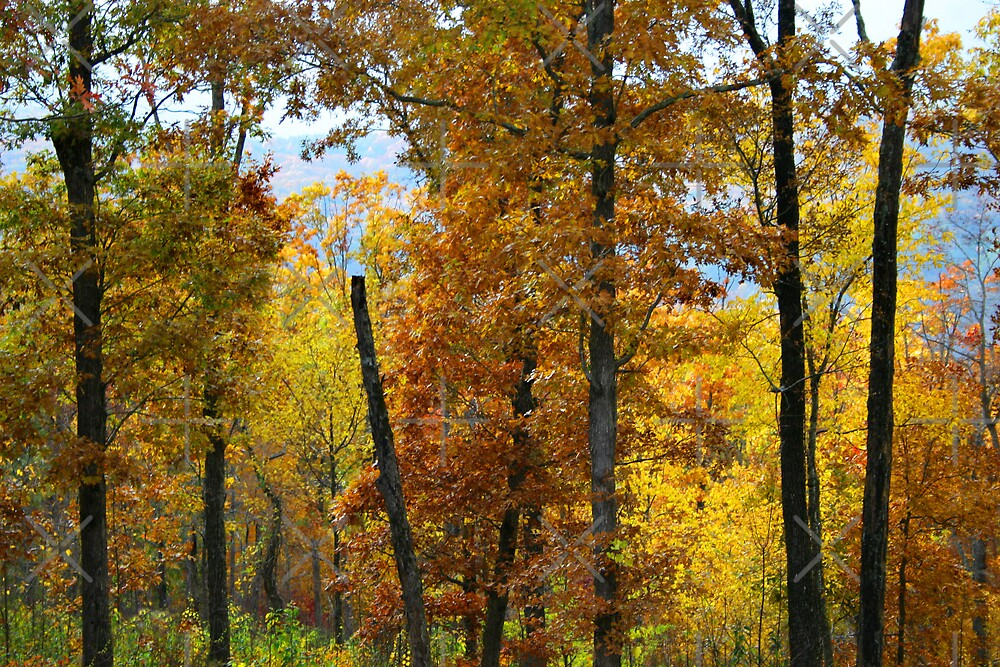 Ozark Forest by Lisa Putman