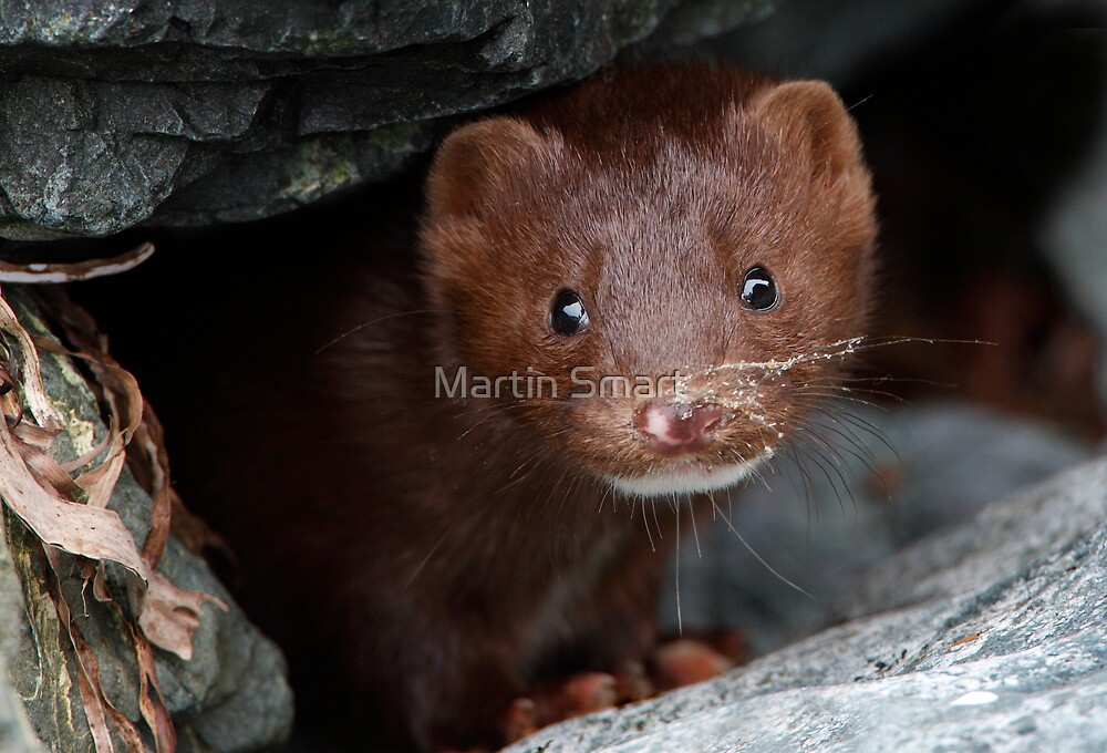 Sandy Whiskers, Soulful Eyes by Martin Smart