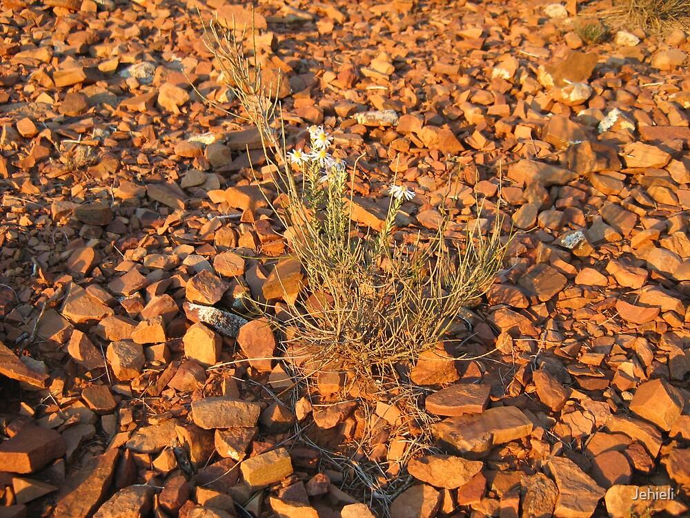 A Daisy Amongst the Rocks by Jehieli