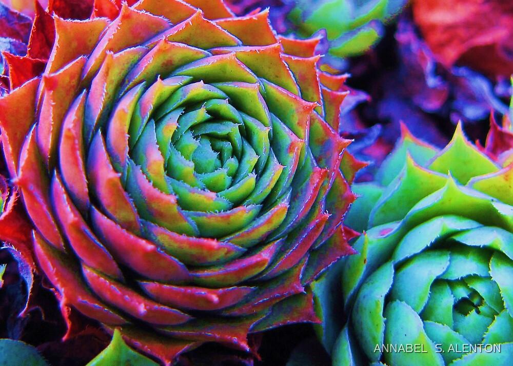 cactus by ANNABEL   S. ALENTON