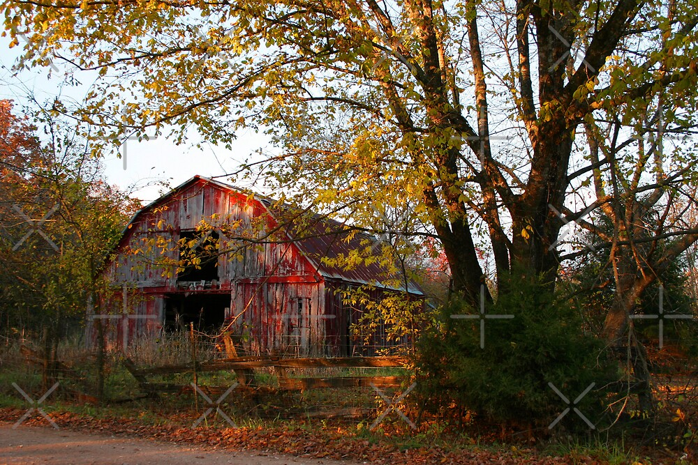 Old Red in Autumn by Lisa Putman