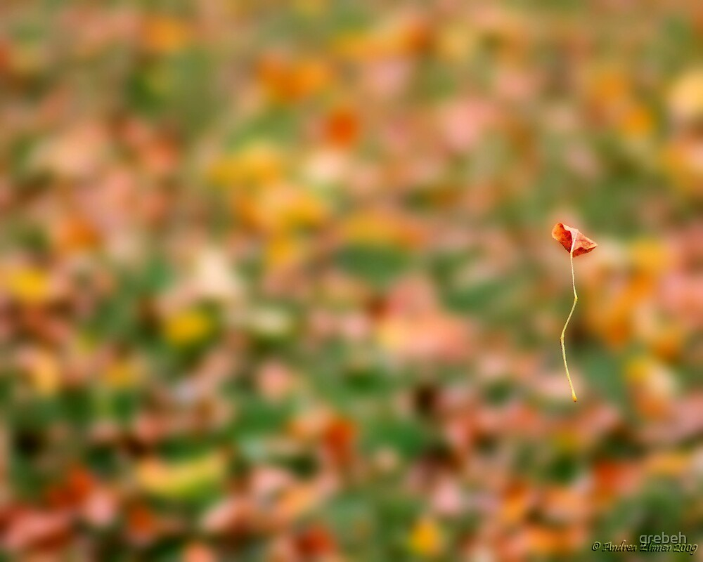 Falling by grebeh