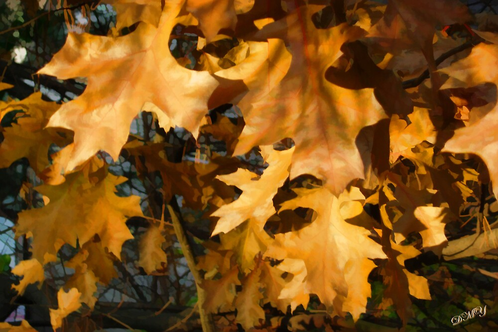 Autumn Leaves by shadyuk