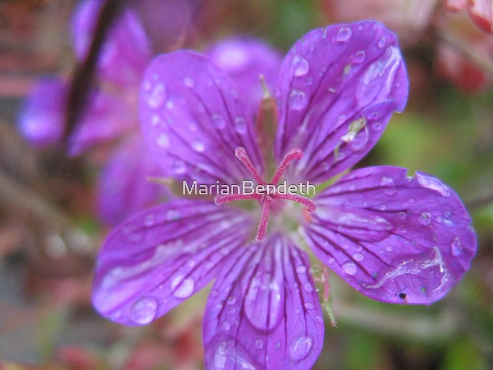 Crack'n Purple Surpise by MarianBendeth
