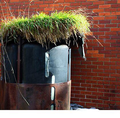 rooftop garden by imagegrabber