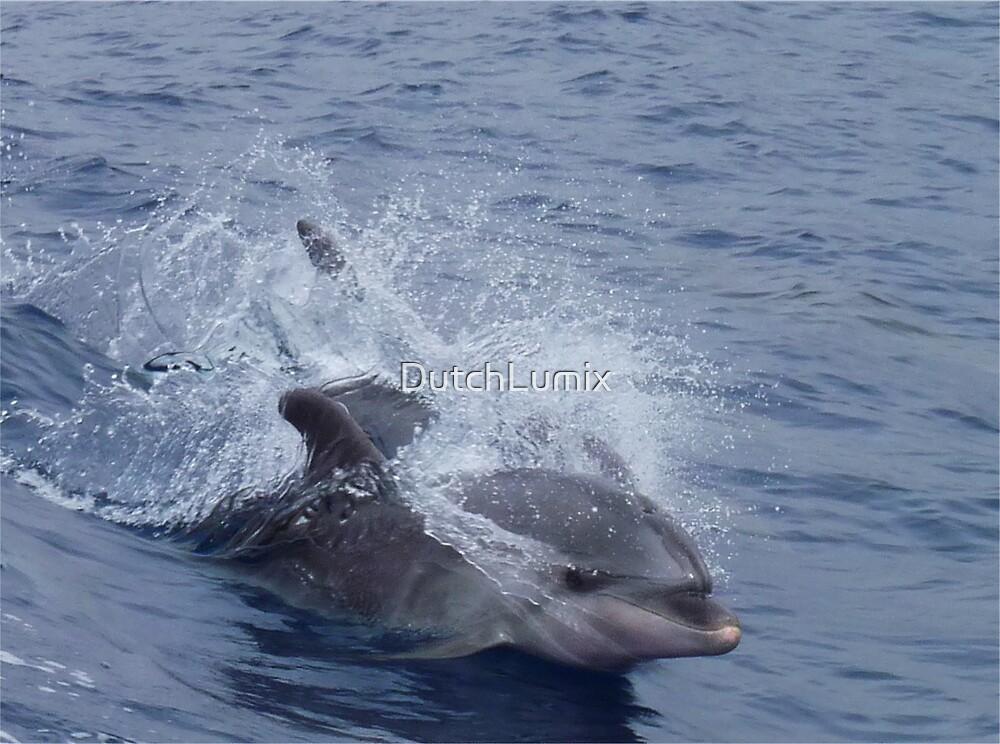 Dolphins Tenerife Spain  by DutchLumix