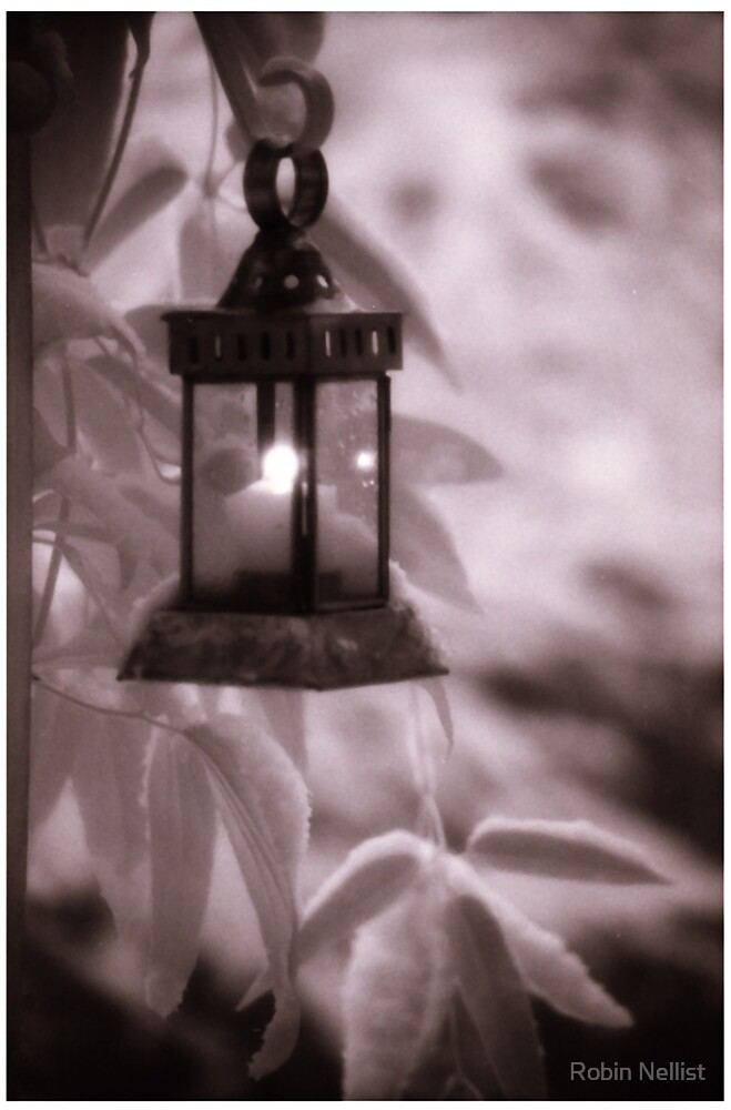 Lantern in Snow by Robin Nellist