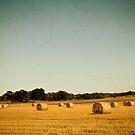 Harvest by Olav Lunde