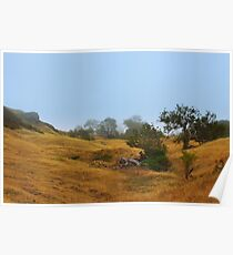 Cambria Fields Poster