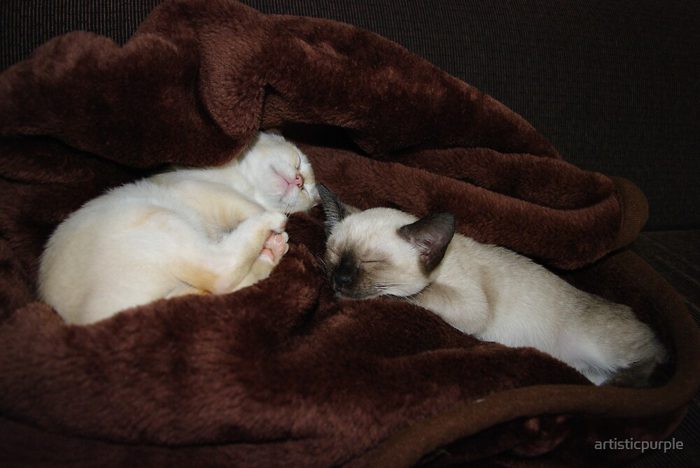 Kittens Tucked In by artisticpurple