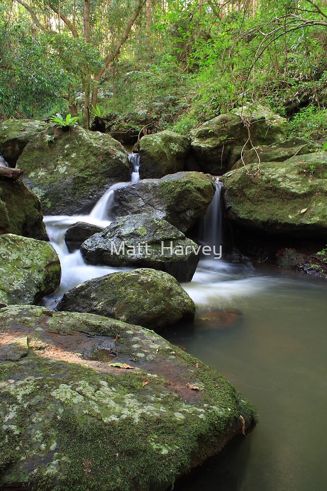 Rainforest Stream by Matt  Harvey