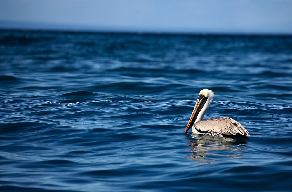 Blue Pelican by citrineblue