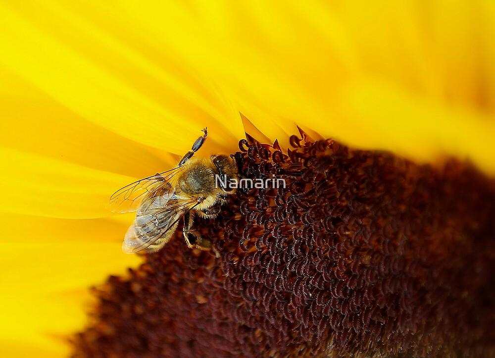 Polish Bee's 2 by Namarin