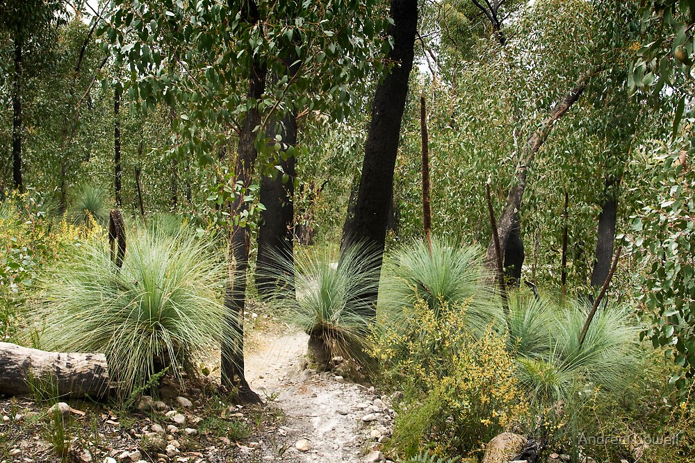 grass trees by Andrew Cowell