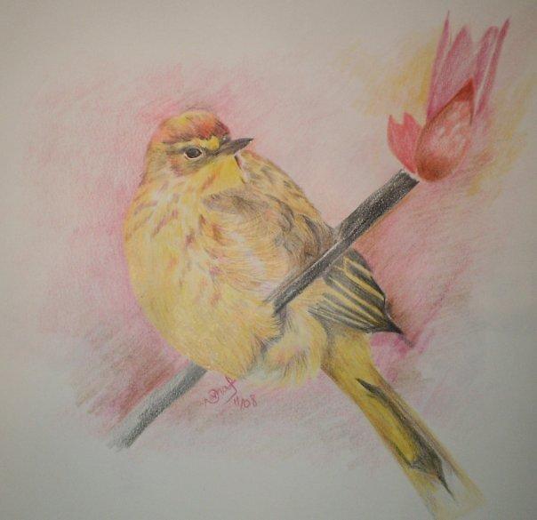bird by Nnaseri