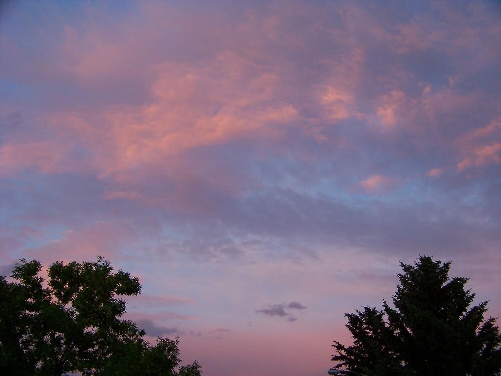 Montana Flamingo Skies by Fred Kamps