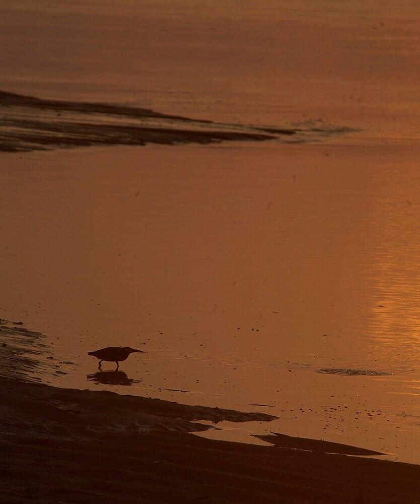Heron sunset by citrineblue