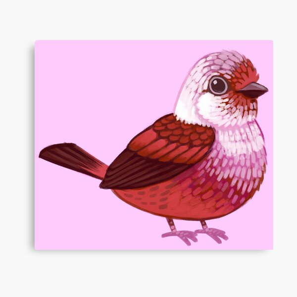 Pride Birds: Pink-Headed Warbler Canvas Print
