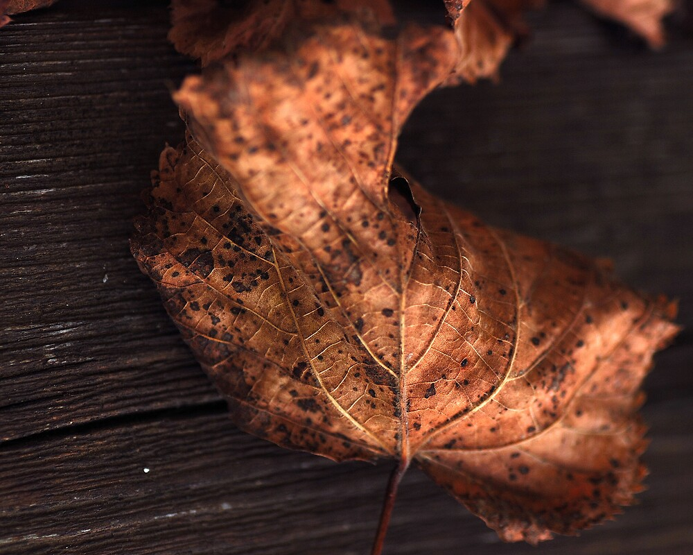 Leaf 1 by loinfr