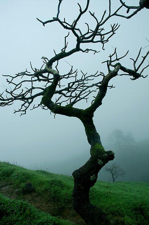 Rainy Season by Sachin Naik