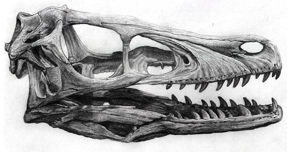Velociraptor skull by Dana Sibera