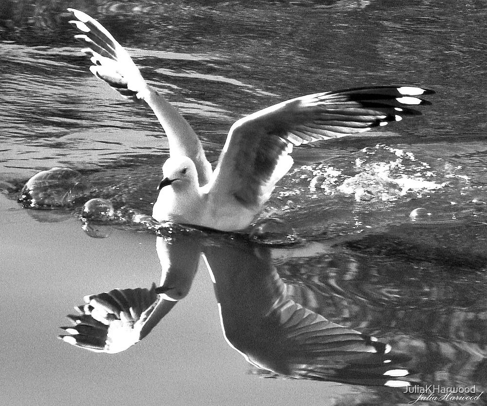 Seagull by JuliaKHarwood