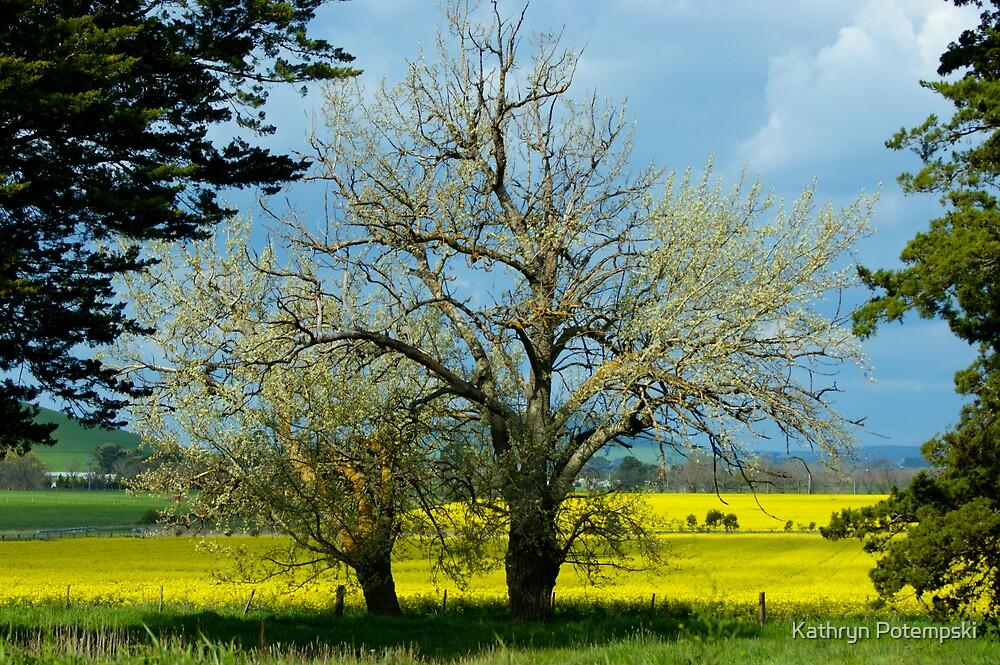 Spring has Sprung by Kathryn Potempski