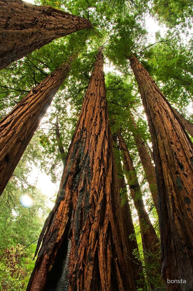 Giant redwoods by bonsta