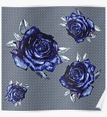 striped blue rose -white Poster