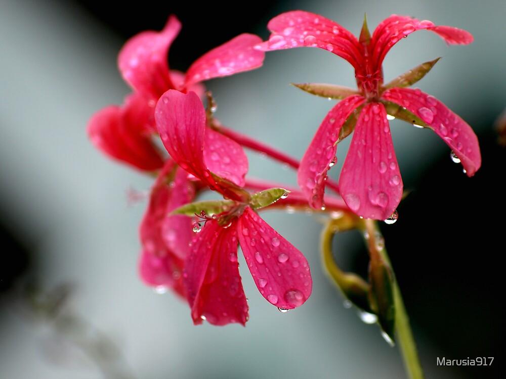 Rain drops keep falling on my head by Marusia917