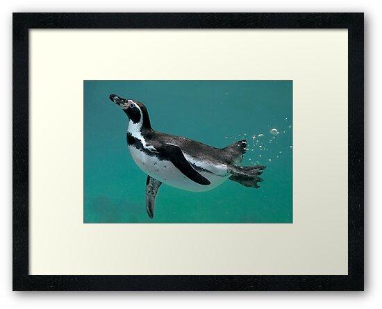 Underwater Ballet by Krys Bailey