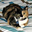 Triff Molly! Katzen-Porträt von BlueMoonRose