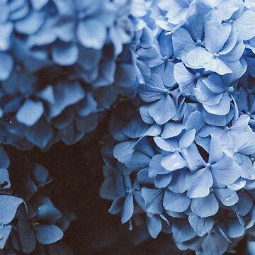 Hydrangeas | Blue by Locan
