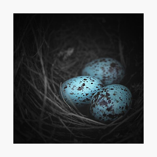 Nest of 3 Photographic Print