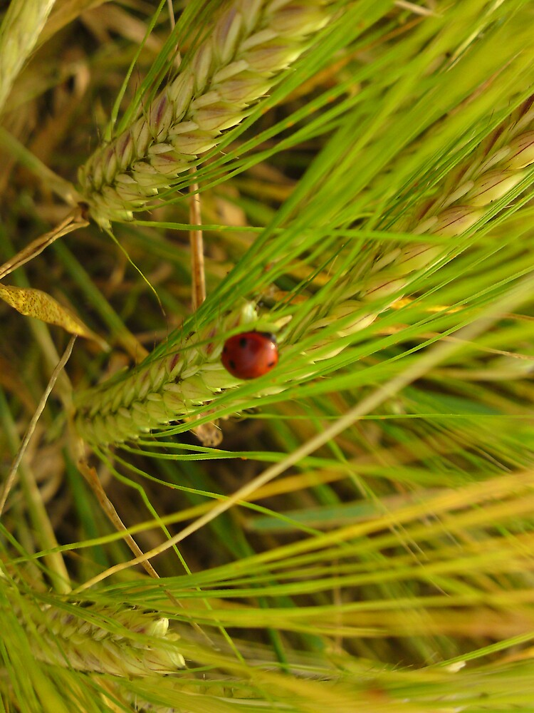 Little lady bird.  by melodie