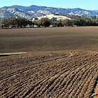 ReadyTo Plant – Capay Valley, Yolo County, CA by Rebel Kreklow