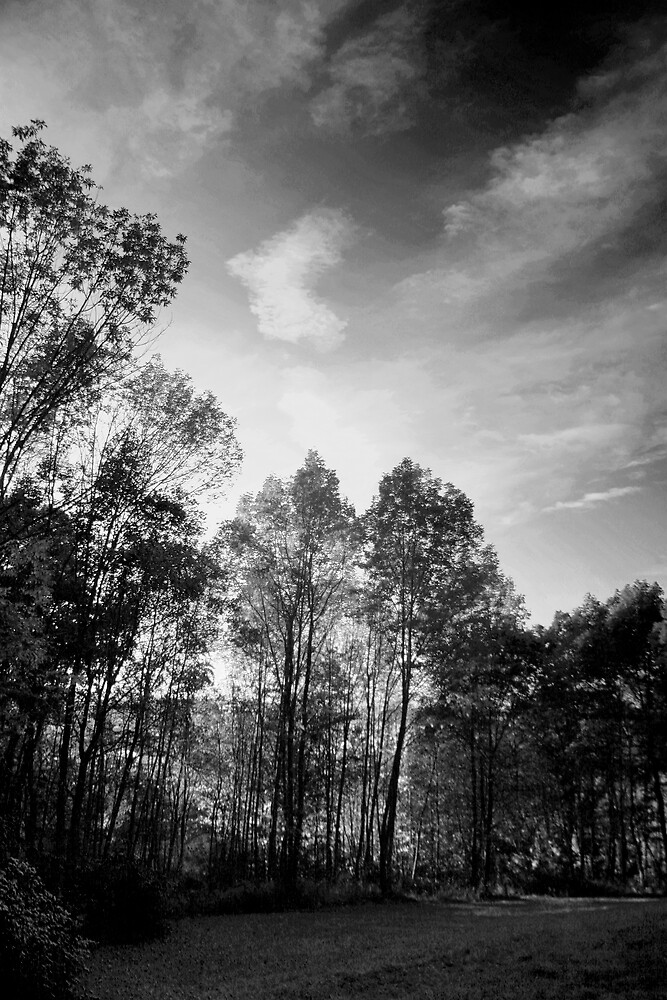 Fall in Black and White by GPMPhotography