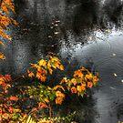 Maple Rain by Wayne King