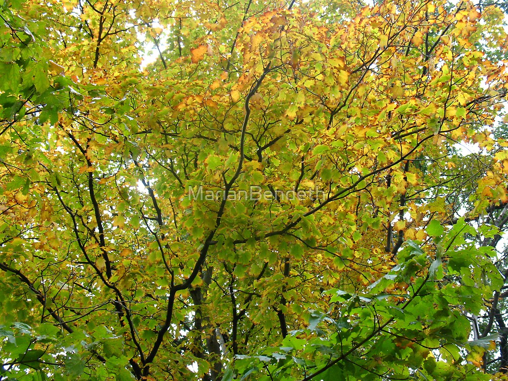Glorious Autumn by MarianBendeth